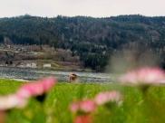 Frühling - Hotel Forelle